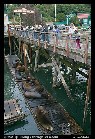 Tourists looking at Sea Lions. Newport, Oregon, USA (color)