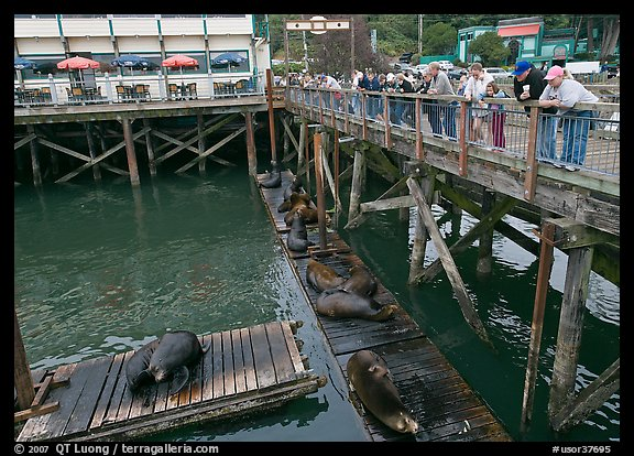 Tourists looking at Sea Lions from pier. Newport, Oregon, USA (color)