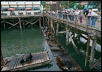 Tourists looking at Sea Lions from pier. Newport, Oregon, USA