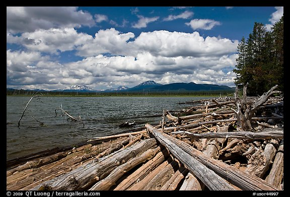 Crane Praire Reservoir and logs. Oregon, USA (color)