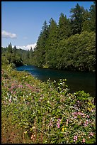 McKenzie River. Oregon, USA ( color)