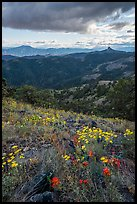 Wildflowers and distant Pilot Rock. Cascade Siskiyou National Monument, Oregon, USA ( color)