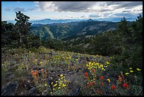 Summer wildflowers and distant Pilot Rock. Cascade Siskiyou National Monument, Oregon, USA ( color)
