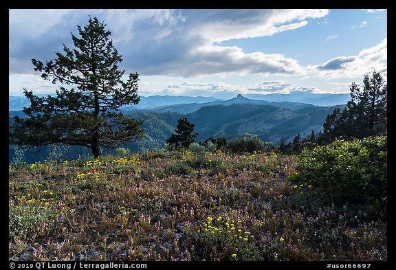 Wildflower carpet and distant Pilot Rock. Cascade Siskiyou National Monument, Oregon, USA (color)