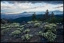 Wildflowers, late afternoon, Hobbart Point. Cascade Siskiyou National Monument, Oregon, USA ( color)