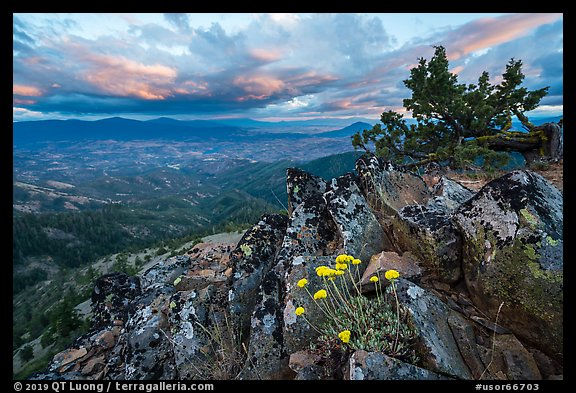 Wildflowers in juniper scablands at sunset, Hobbart Point. Cascade Siskiyou National Monument, Oregon, USA (color)