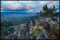 Wildflowers in juniper scablands at sunset, Hobbart Point. Cascade Siskiyou National Monument, Oregon, USA ( color)