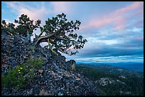 Juniper and wildflowers at sunset, Hobbart Point. Cascade Siskiyou National Monument, Oregon, USA ( color)