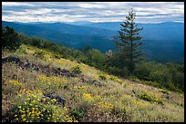Wildflowers and Siskiyou Mountains. Cascade Siskiyou National Monument, Oregon, USA ( color)