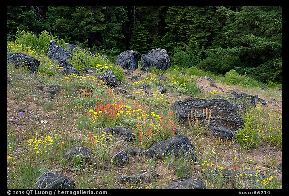 Wildflowers and rocks in clearing. Cascade Siskiyou National Monument, Oregon, USA (color)