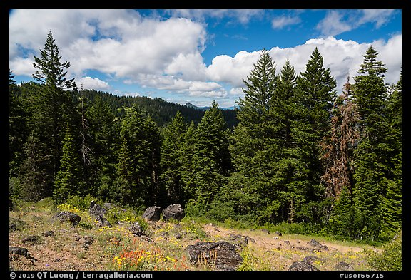Clearing with distant view of Pilot Rock. Cascade Siskiyou National Monument, Oregon, USA (color)