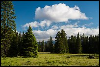 Meadow and clouds near Grizzly Peak. Cascade Siskiyou National Monument, Oregon, USA ( color)