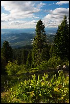 Corn Lilly and view near Grizzly Peak. Cascade Siskiyou National Monument, Oregon, USA ( color)