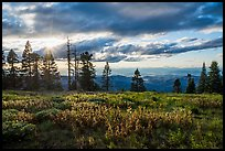 Meadow, sun, and view over mountains near Grizzly Peak. Cascade Siskiyou National Monument, Oregon, USA ( color)