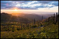 Sun setting over Burned forest, Grizzly Peak. Cascade Siskiyou National Monument, Oregon, USA ( color)
