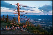 Last light on dead tree, with distant Pilot Rock, Grizzly Peak. Cascade Siskiyou National Monument, Oregon, USA ( color)
