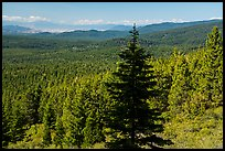 Fir in shadow and mixed conifer forest, Surveyor Mountains. Cascade Siskiyou National Monument, Oregon, USA ( color)