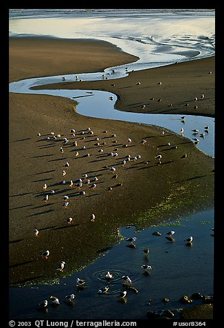 Stream on beach and seabirds, Pistol River State Park. Oregon, USA (color)