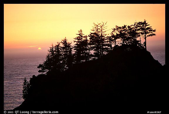 Trees on rock and ocean at sunset, Samuel Boardman State Park. Oregon, USA (color)