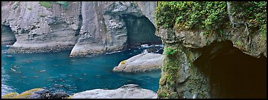 Seascape with seacaves, Olympic Peninsula. Olympic Peninsula, Washington (Panoramic color)