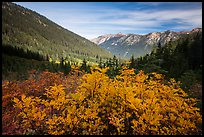 Fall foliage in valley below Easy Pass, Okanogan National Forest. Washington ( color)