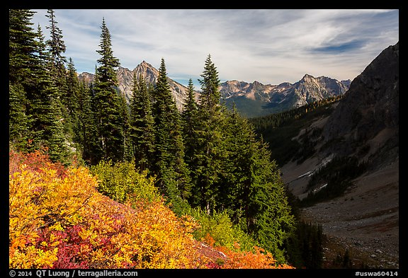 Berry plants, row of fir, and peaks below Easy Pass, Okanogan National Forest. Washington (color)