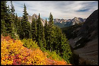 Berry plants, row of fir, and peaks below Easy Pass, Okanogan National Forest. Washington ( color)