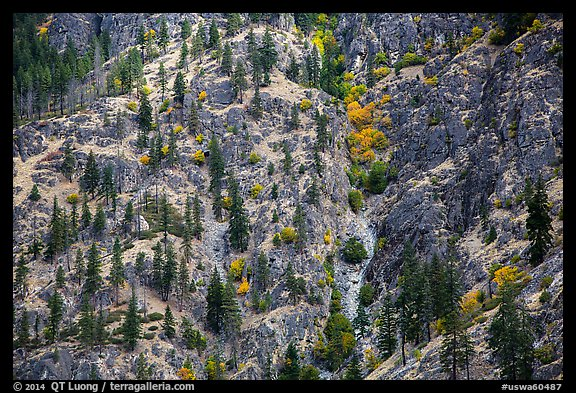 Mix of conifers and deciduous trees in autumn on rocky slopes, Lake Chelan. Washington (color)
