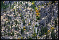 Mix of conifers and deciduous trees in autumn on rocky slopes, Lake Chelan. Washington ( color)