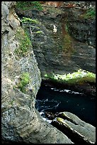 Sea cliffs, Cape Flattery, Olympic Peninsula. Olympic Peninsula, Washington ( color)