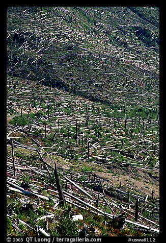Forests flattened by the eruption lie pointing away from the blast. Mount St Helens National Volcanic Monument, Washington (color)