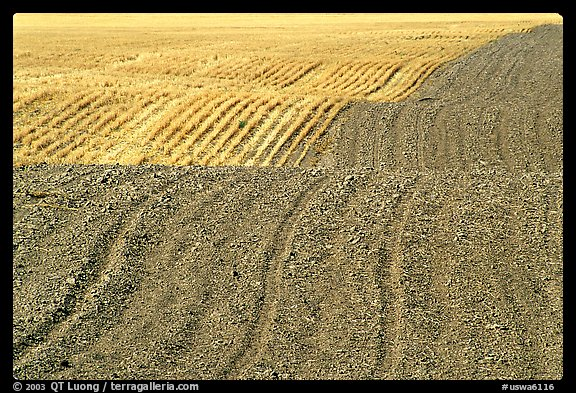 Undulating field with plowing patterns, The Palouse. Washington (color)