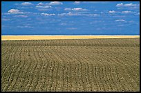 Field with plowing lines, The Palouse. Washington