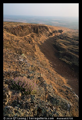 Wildflowers and cliff, Saddle Mountain, Hanford Reach National Monument. Washington (color)