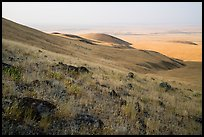 Rocks and grasses on hills and plain, Saddle Mountain Unit, Hanford Reach National Monument. Washington ( color)