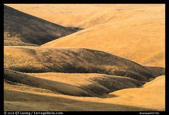 Grassy hills, Saddle Mountain Unit, Hanford Reach National Monument. Washington (color)