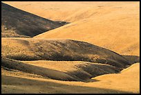 Grassy hills, Saddle Mountain Unit, Hanford Reach National Monument. Washington ( color)