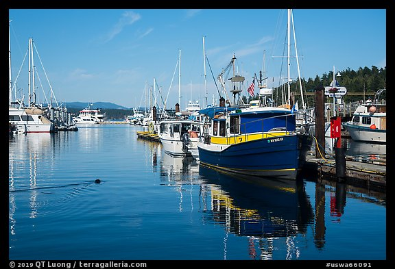 Friday Harbor marina with harbor seal, San Juan Island. Washington (color)