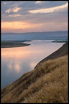 Grasses and Columbia River at sunset, Hanford Reach National Monument. Washington ( color)