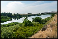 Banks of free-flowing section of Columbia River with verdant vegetation, Ringold Unit, Hanford Reach National Monument. Washington ( color)