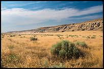 Grasses and cliffs in summer, Ringold Unit, Hanford Reach National Monument. Washington ( color)