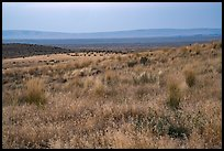 Sub-steppe grasses and distant Saddle Mountain, Hanford Reach National Monument. Washington ( color)