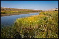 Grasses, Columbia River secondary channel, Savage Island, Hanford Reach National Monument. Washington ( color)