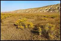 Rabittbrush and bluffs in autumn, Hanford Reach National Monument. Washington ( color)