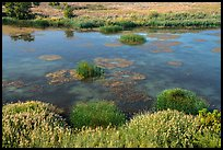 Wetlands on the shore of Savage Island, Hanford Reach National Monument. Washington ( color)