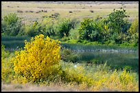 Autumn foliage and wetlands, Hanford Reach National Monument. Washington ( color)