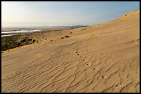 Animal track on sand dunes, Hanford Reach National Monument. Washington ( color)