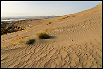 Ripples and wildlife track on sand dunes, Hanford Reach National Monument. Washington ( color)