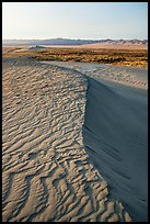 Crest of sand dunes, Hanford Reach National Monument. Washington ( color)