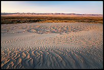 Sand ripples and Saddle Mountains at sunset, Hanford Reach National Monument. Washington ( color)